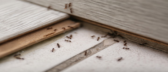 Effective Ant Control Service