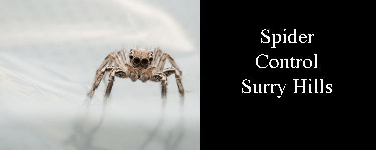 Spider Control Surry Hills